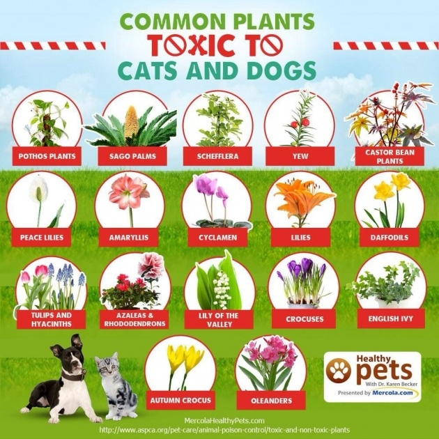 Good Outdoor Plants Healthy For Dogs Picture