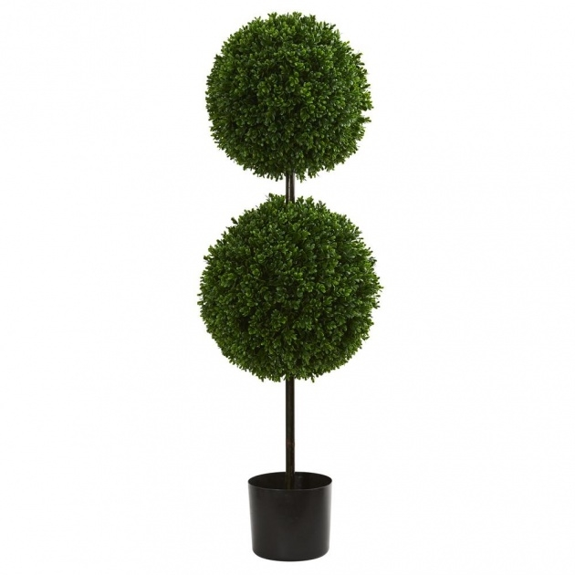 Good Outdoor Topiary Plants Picture