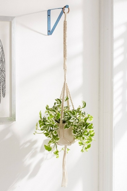 Good Plant Wall Bracket Image