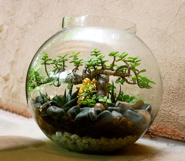 Good Plants In Glass Bowl Image