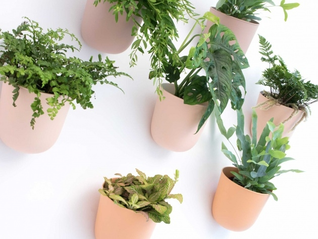 Good Wall Plant Pots Image