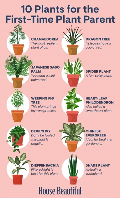 Gorgeous Best Indoor Plants For Low Light Picture