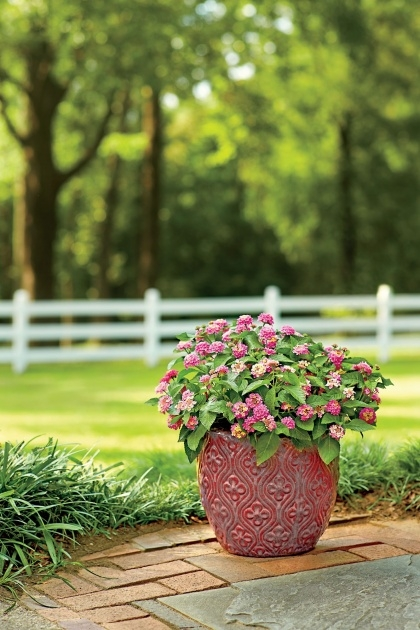 Gorgeous Container Gardens For Full Sun Picture