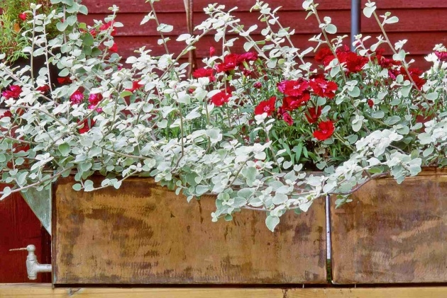 Gorgeous Hanging Perennials Flowers For Containers Picture