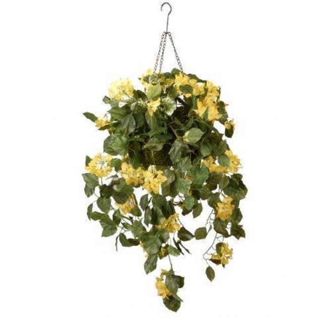 Gorgeous Hanging Vine Plants Picture