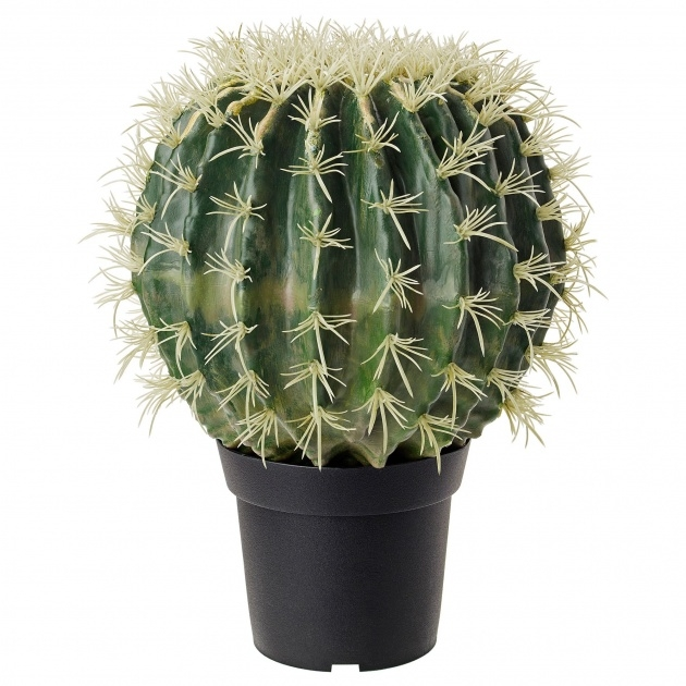 Gorgeous Outdoor Artificial Cactus Plants Photo