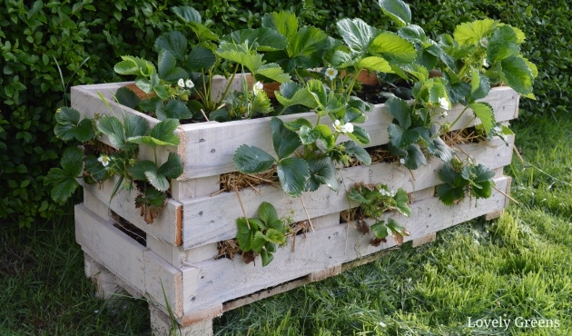 Gorgeous Pallet Strawberry Planter Image