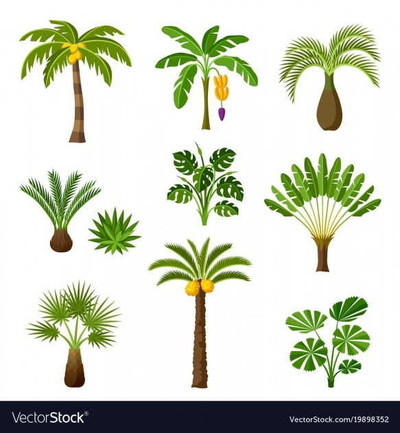 Gorgeous Palm Tree Plant Image