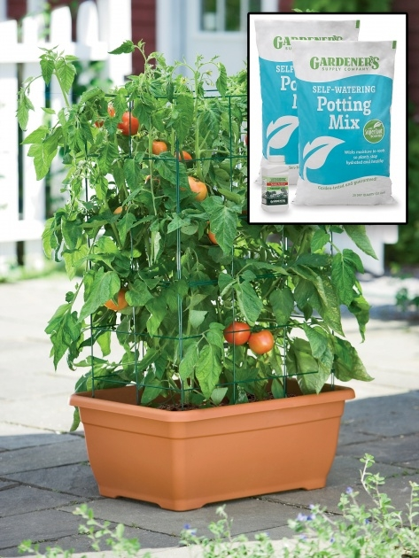 Gorgeous Tomato Planter Box Image