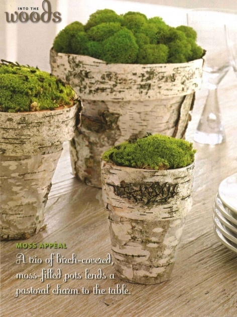 Gorgeous Tree Bark Planters Picture