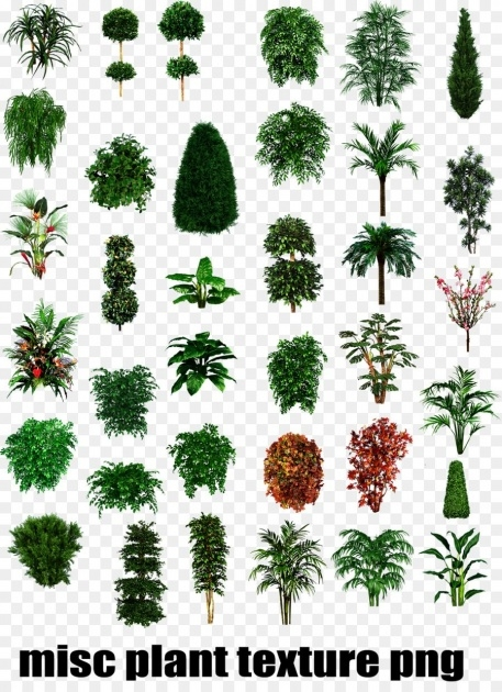 Gorgeous Tropical Types Of Plants Photo