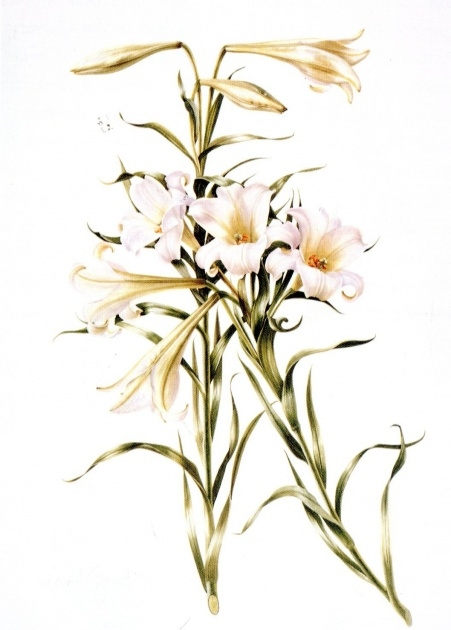 Great Achieved Lily Flowers Photo