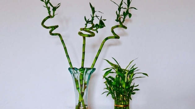 Great Bamboo Plant Photo