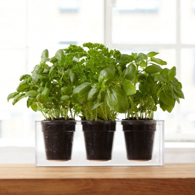 Great Clear Plant Pot Image