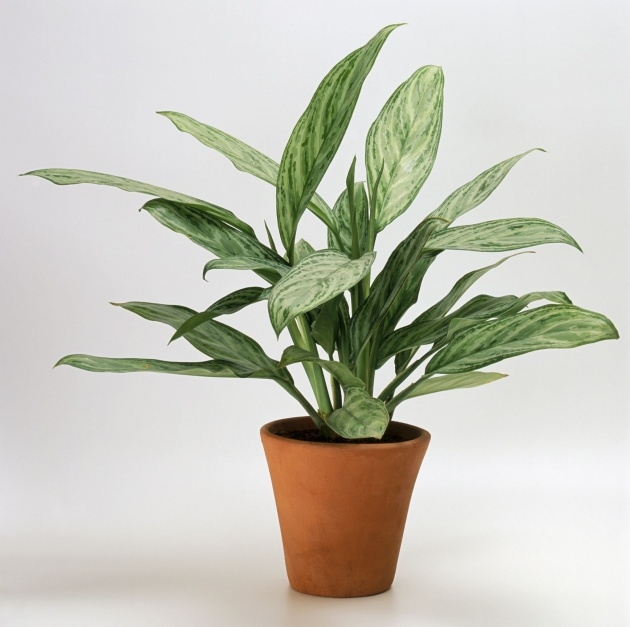 Great Common House Plants Photo