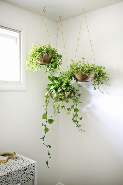 Great Hanging Plant Pots Photo