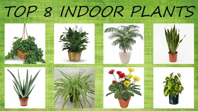 Great Ideas Air Purifying Indoor Plants Picture