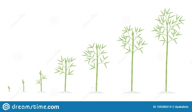 Great Ideas Bamboo Plant Growth Image