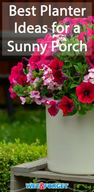 Great Ideas Best Flowers For Planters Image