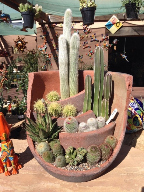 Great Ideas Cactus Planter Ideas Photo