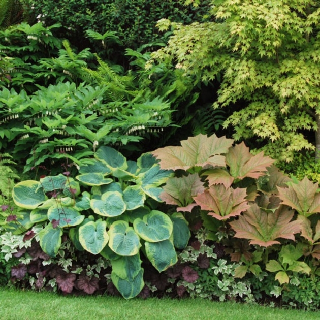 Great Ideas Plant Border Ideas Picture
