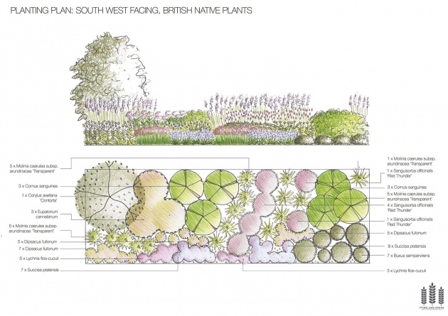 Great Ideas Planting Design Plan Picture