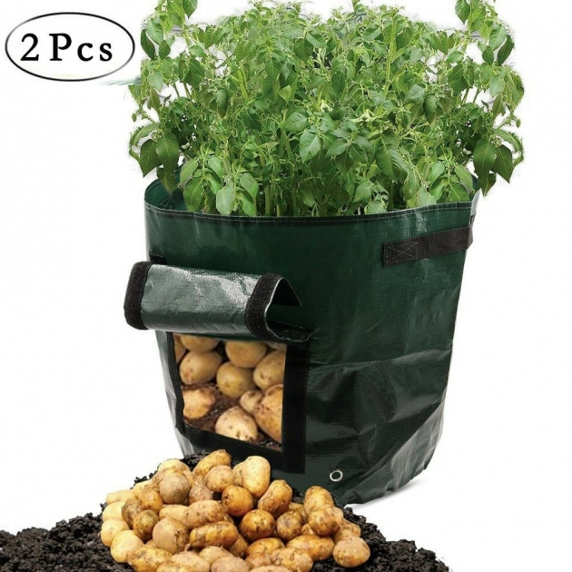 Great Ideas Potato Planter Box Picture