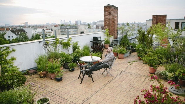 Great Ideas Roof Garden Plants Picture