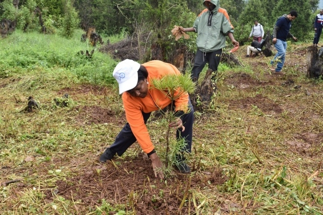 Great Ideas Tree Planting Picture