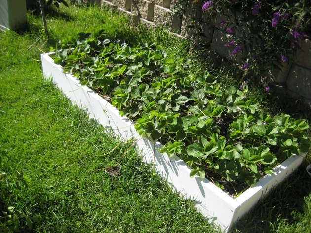 Great Ideas Vegetable Garden Planter Box Photo