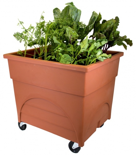 Great Ideas Vegetable Planter Box Photo