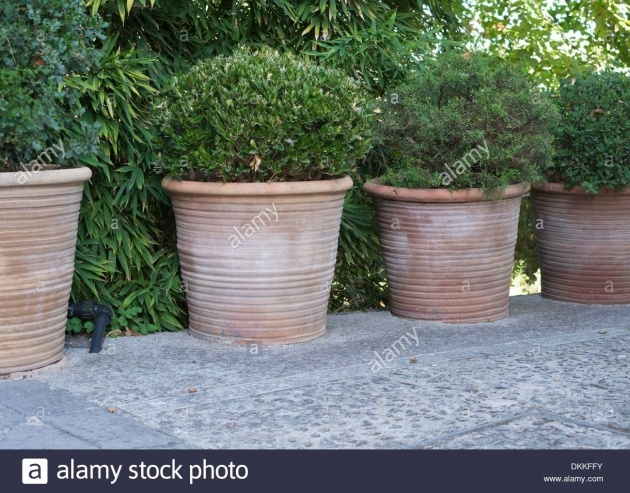 Great Large Terracotta Planter Photo