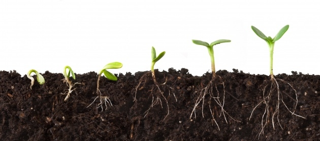 Great Plant Soil Picture