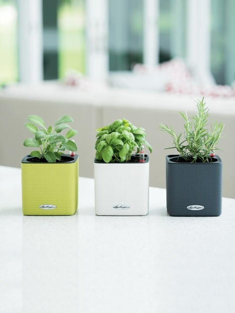 Great Self Watering Herb Planter Image