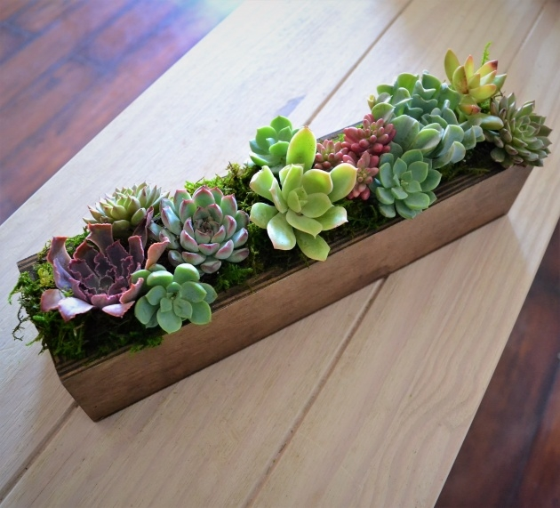 Great Succulent Planter Box Photo