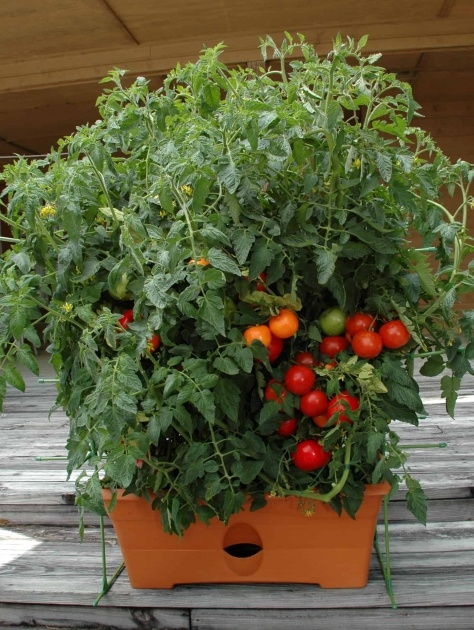 Great Tomato Planter Box Image