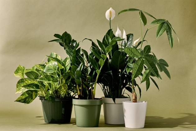 Great Type Of House Plants Photo