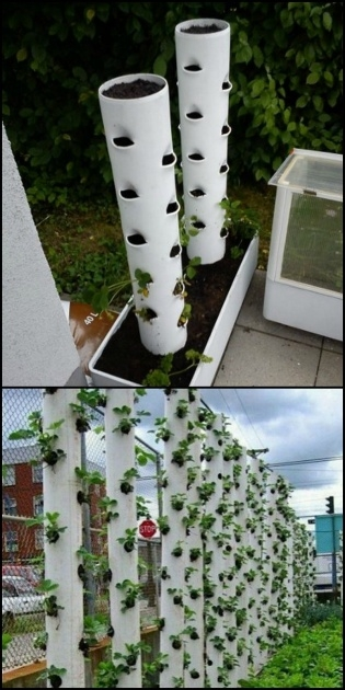 Great Vertical Strawberry Planter Photo