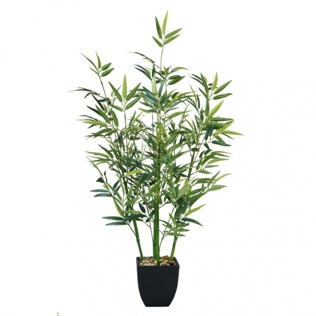 Ideas for Bamboo Plant Image