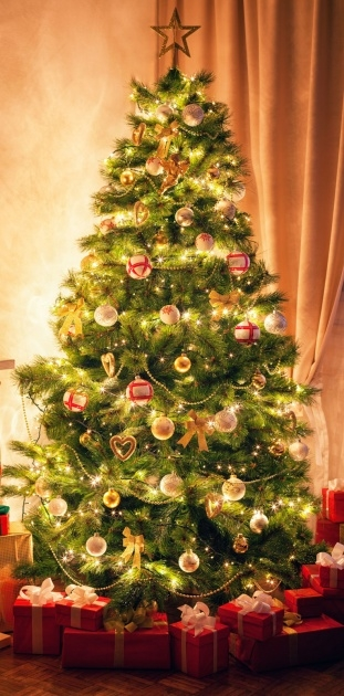 Ideas for Christmas Tree Plant Image