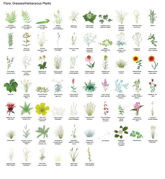 Ideas for Herbaceous Plants List And Pictures Photo