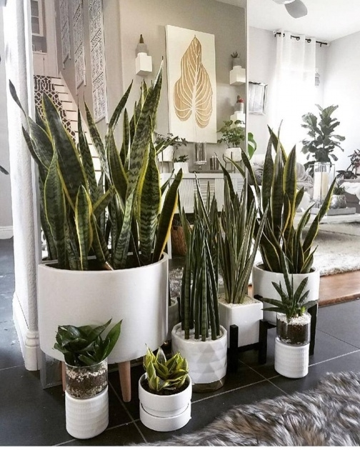Ideas for Indoor Pot To Beutify House Picture