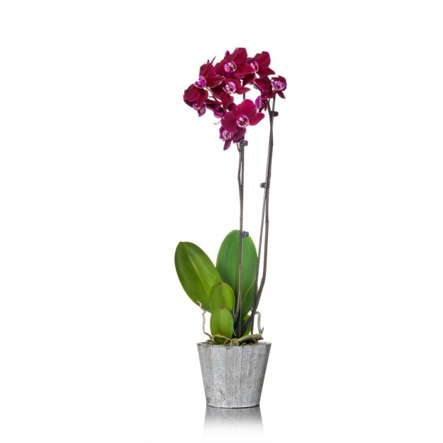 Ideas for Orchid Plant Pot Picture
