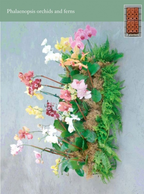 Ideas for Orchid Wall Planter Image