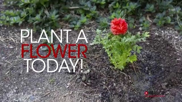 Ideas for Plant A Flower Picture