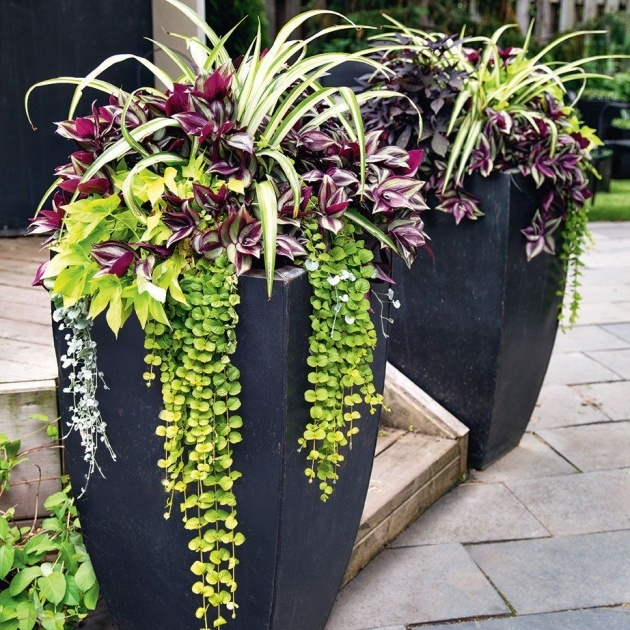Ideas for Planter Plants Ideas Picture