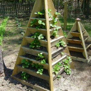 Strawberry Planter Plans