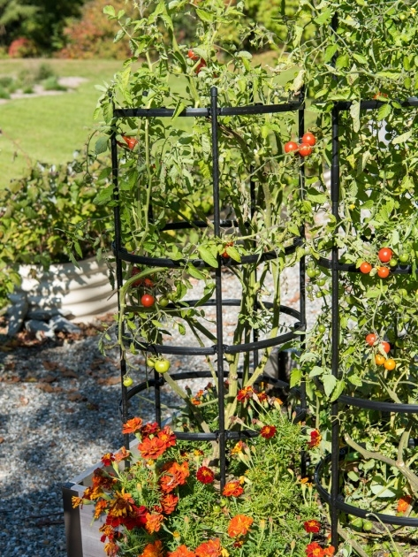 Ideas for Tomato Cages Photo