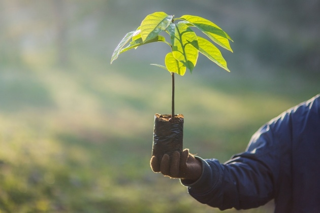 Ideas for Tree Planting Image