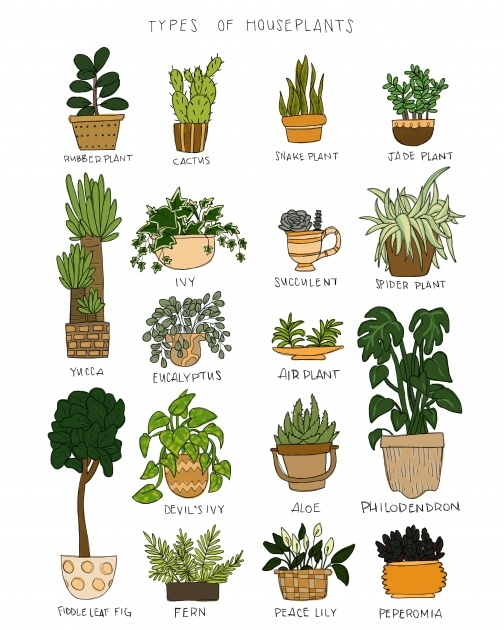 Ideas for Type Of House Plants Image